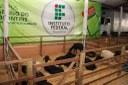 IFTO presente na exposição agropecuária de Paraíso do Tocantins