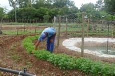 Hortaliças foram doadas aos funcionários terceirizados